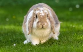 Picture nature, rabbit, Eeyore, truck