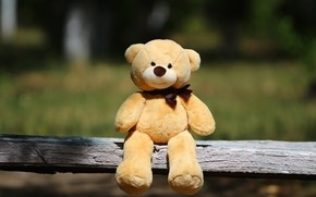Picture background, toy, shop, bear