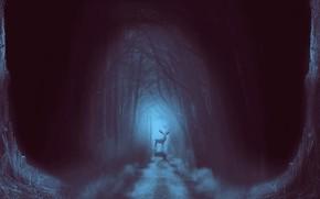Picture road, forest, fog, deer