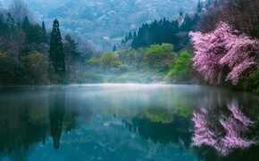 Picture spring, Sakura, haze, lake, Japan, dervla, fog, nature, flowers
