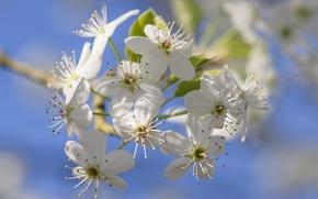 Wallpaper garden, spring, petals, flowers