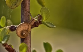 Picture macro, snail, branch, leaves