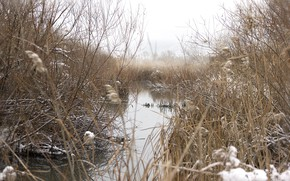 Picture pond, Tupa, using
