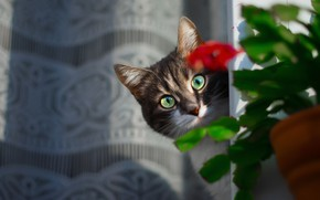 Picture flower, cat, look, face, Kote, blind