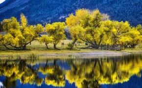 Picture autumn, trees, mountains, nature, lake, Colorado, USA, Palmer Lake