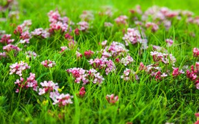 Picture grass, flowers, nature, meadow