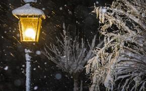 Picture snow, branches, lantern