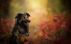 Wallpaper dog, branches, bokeh, autumn, leaves