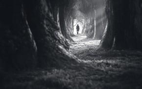 Picture dark, white, forest, woman