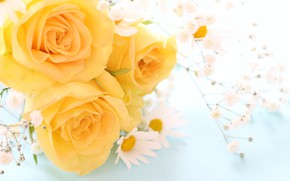 Picture flowers, Daisy, Roses