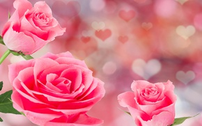 Wallpaper romantic, roses, hearts, Valentine's Day, roses, flowers, pink