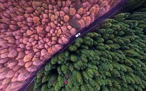 Picture forest, trees, China, Shanwangping Karst, National environmental Park, Doroga