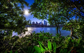 Picture greens, the sun, trees, branches, bridge, shore, foliage, home, New York, skyscrapers, Bay, USA, the ...