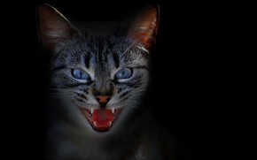 Picture cat, face, background