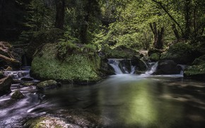 Picture forest, trees, nature, waterfall