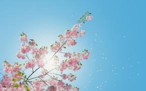 Picture The sun, The sky, Nature, Sakura