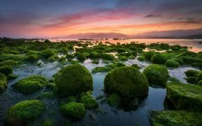 Wallpaper sunset, stones, the sky, sunrise, the evening, algae, sea, Bay, nature, morning