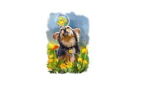 Picture flowers, bubbles, dog
