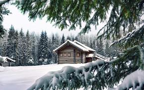 Wallpaper House, Winter, Snow, Trees, Spruce, Pine, Needles