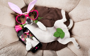 Wallpaper rose, dog, ears, glasses, bunny ears, pink, rose, funny, hearts, happy, holiday, dog
