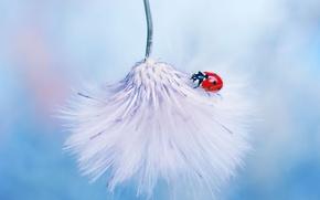 Picture macro, ladybug, fluff