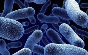 Wallpaper bacteria, microbes, microscope, microorganisms