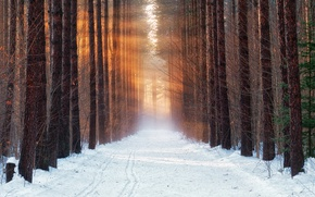 Picture cold, winter, forest, snow, morning