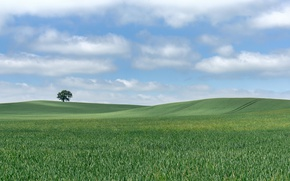 Picture field, the sky, clouds, tree, hills, horizon