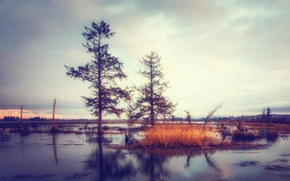 Picture trees, reflection, swamp