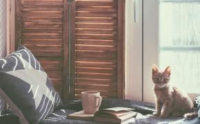 Wallpaper cat, book, bed, pillow, kitty, window, mug, room, cat