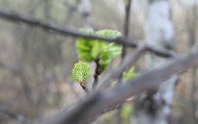 Picture branches, nature, sheet, green, green, spring, small, nature, spring, leaf, through the branches