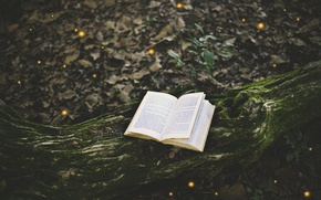 Picture forest, tree, moss, book, page