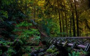 Picture forest, bridge, river, hdr, the bridge over the river in the forest, bridge in the ...