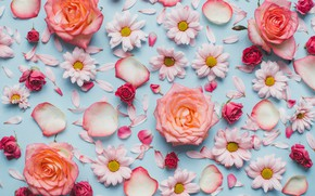 Picture flowers, roses, chamomile, pink, fresh, wood, pink, flowers, beautiful, spring, roses, tender, floral