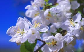 Picture tree, petals, flowering