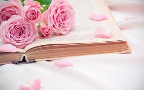 Picture roses, petals, book