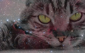 Picture cat, look, space