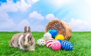Picture holiday, basket, rabbit, Easter, eggs dyed