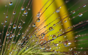 Picture water, drops, macro, nature, reflection, fantasy, beauty, plants