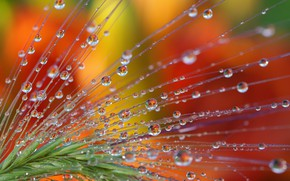 Picture water, drops, macro, nature, reflection, fantasy, beauty, plants, Association