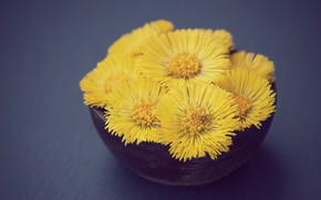 Picture flowers, bouquet, yellow, flower, decor, Mother and stepmother, farfara, tussilago, coltsfoot