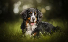 Picture greens, each, dog, Ferdinand