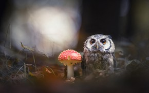 Picture forest, animals, nature, the dark background, background, owl, bird, mushroom, mushroom, owl