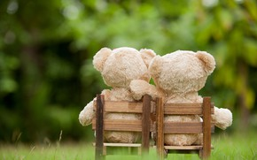 Picture love, toy, bear, pair, love, two, bear, park, teddy