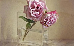 Picture texture, vase, wilting, two roses