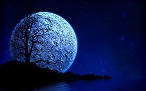 Picture stars, night, tree, the moon