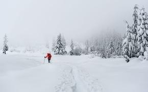 Wallpaper winter, skier, snow, people