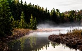 Picture lake, Germany, Germany, Bavaria, Hackensee