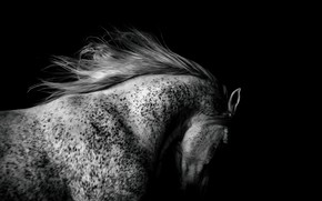 Picture light, horse, shadow