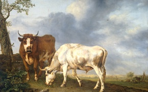 Picture animals, oil, picture, canvas, Yang Cobell, Oxen in the Meadow